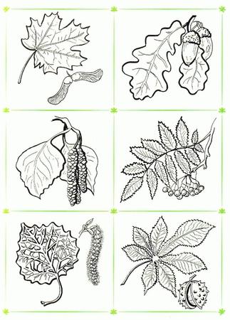 Пальчиковые игры (Осенние листья) - запись пользователя ...