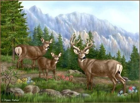 Рисунки животных на природе карандашом