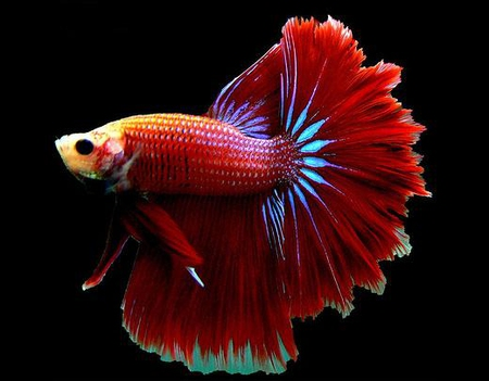 сомики аквариумные фото и описание
